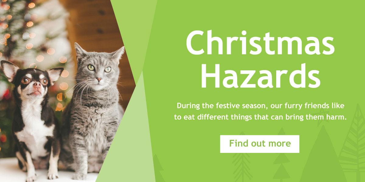 Final-Ascot-Vet-Christmas-Hazards-Web-Banner-Files