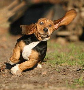 Pet Ear Care – Doing Your Part